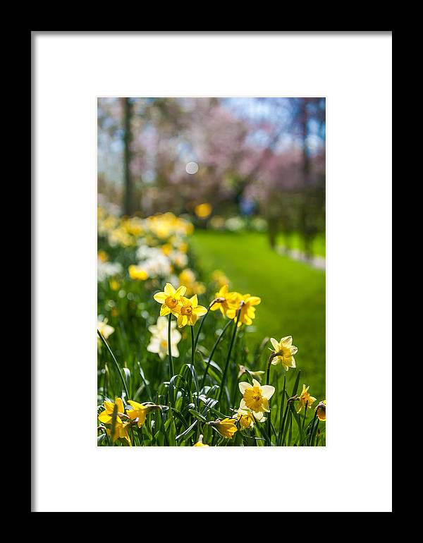 Spring Framed Print featuring the photograph Spring In Holland. Garden Keukenhof by Jenny Rainbow