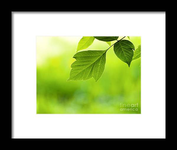 Leaf Framed Print featuring the photograph Spring Leaf On Green by Konstantin Sutyagin