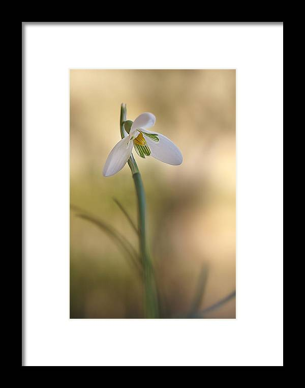 Flower Framed Print featuring the photograph Spring Messenger by Annie Snel