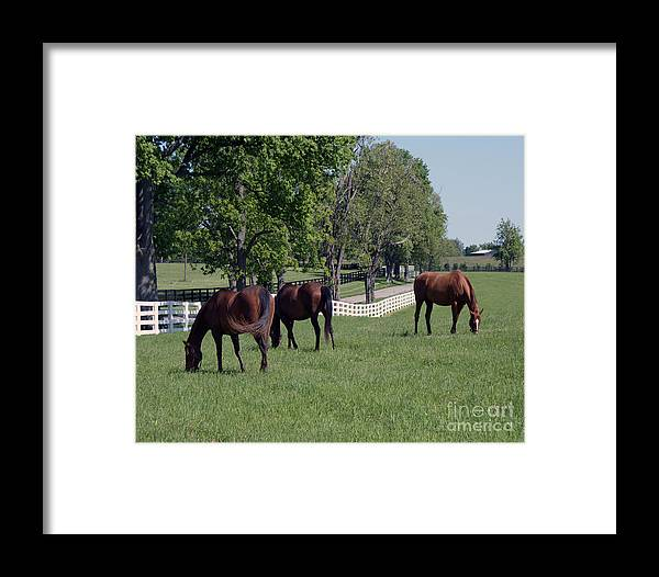 Kentucky Framed Print featuring the painting Spring Paddock by Roger Potts