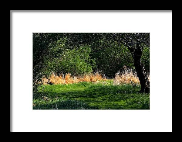 Spring Framed Print featuring the photograph Spring Path by Chuck Purro