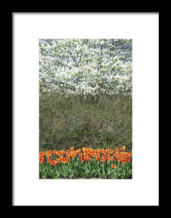 Tulips Framed Print featuring the photograph Spring Time Blooms by Shelley Thomason
