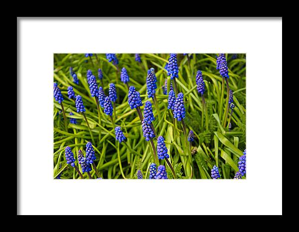 Spring Framed Print featuring the photograph Spring Time by Martin Newman
