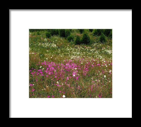 Nature Framed Print featuring the photograph Spring Time by Raymond Earley