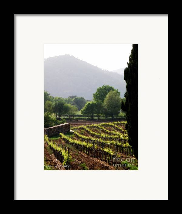 Vineyard Framed Print featuring the photograph Spring Vines In Provence by Lainie Wrightson