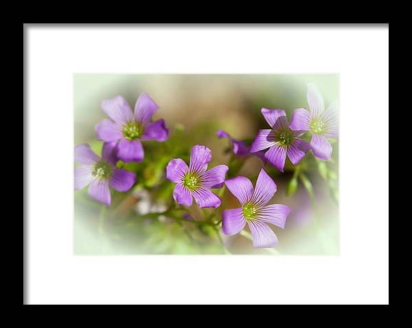 Flower Framed Print featuring the photograph Spring Wildflowers by Stephen Anderson