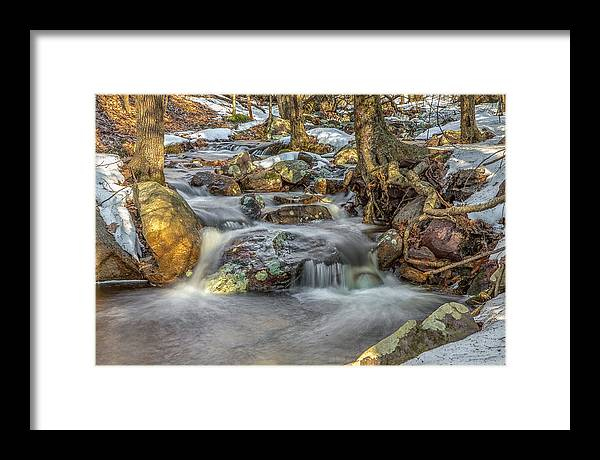 2014 Framed Print featuring the photograph Spring Woods by Sara Hudock
