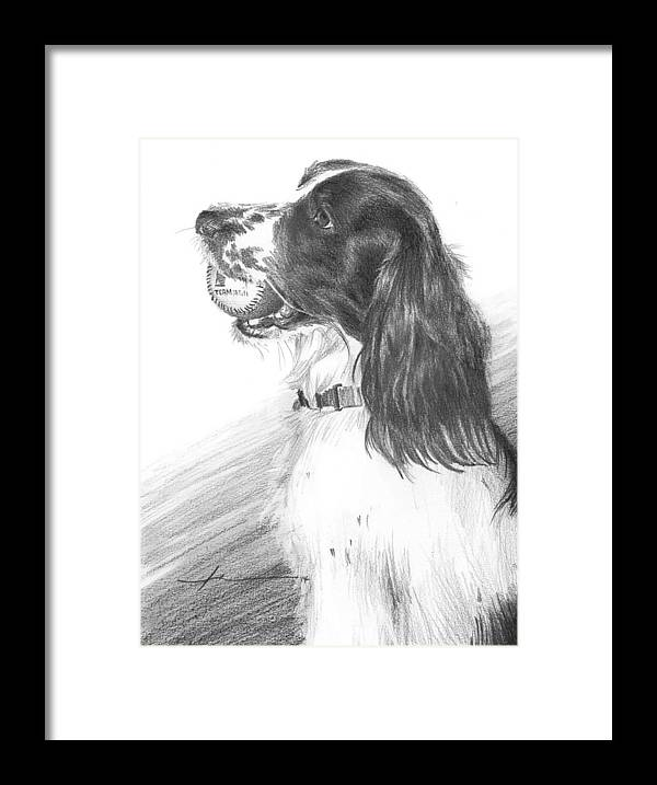 <a Href=http://miketheuer.com Target =_blank>www.miketheuer.com</a> Framed Print featuring the drawing Springer Spaniel Playing Fetch Pencil Portrait by Mike Theuer