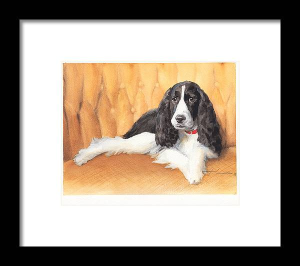 <a Href=http://miketheuer.com Target =_blank>www.miketheuer.com</a> Springer Spaniel Watercolor Portrait Framed Print featuring the drawing Springer Spaniel Watercolor Portrait by Mike Theuer