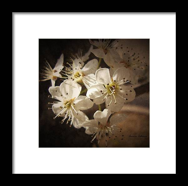 Springtime Framed Print featuring the photograph Springtime Blossoms by Annie Adkins