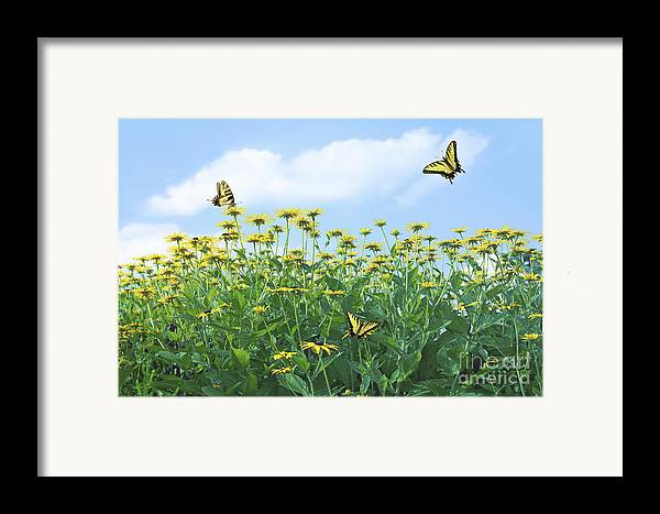 Spring Framed Print featuring the photograph Springtime by Diane Diederich