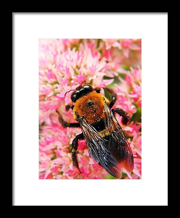 Bumblebee Framed Print featuring the photograph Sprinkled With Pollen by Chris Berry