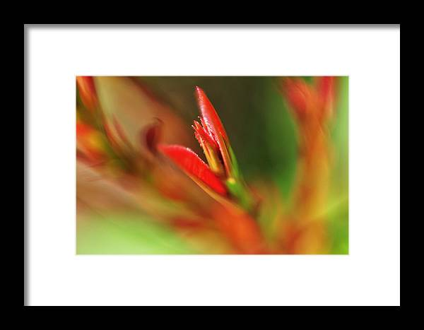 Macro Framed Print featuring the photograph Sprout by John Blanchard