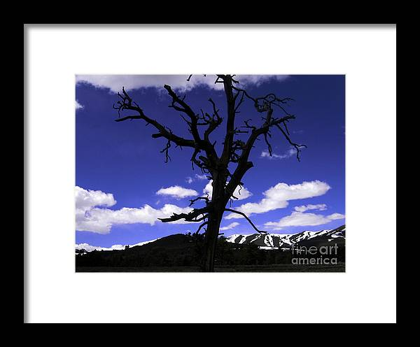 Landscape Framed Print featuring the photograph Squigly Tree by Janice Westerberg