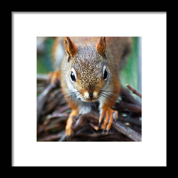 Squirrel Framed Print featuring the photograph Squirrel Close-up by Kerri Farley