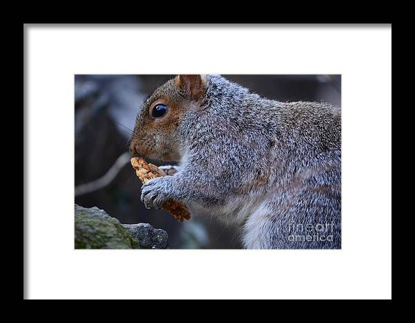 Squirrel Framed Print featuring the photograph Squirrel Eating Granola by Eric Soderman