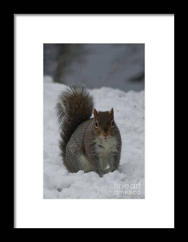 Squirrel Framed Print featuring the photograph Squirrel by Sara Messenger