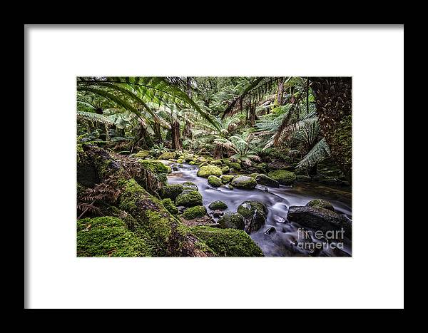 Australia Framed Print featuring the photograph St Columba Falls by Paul Woodford