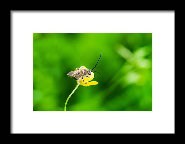 Animal Framed Print featuring the photograph Staking A Claim - Featured 3 by Alexander Senin