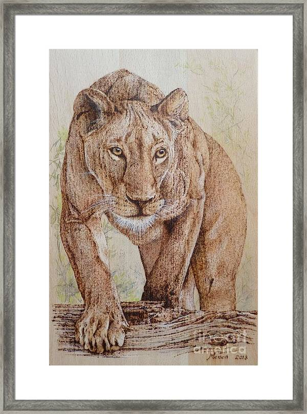 Lioness Stalking Her Pray Framed Print Picture Poster Animal Hunting Art