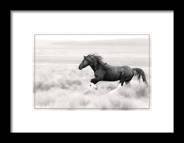 Stallion Blur Framed Print featuring the photograph Stallion Blur by Wes and Dotty Weber