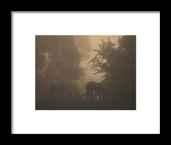 Horses Sunrise Minnesota Framed Print featuring the photograph Stallions In The Fog by Kim Eastwood