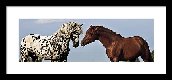 Stalllion Buddies Framed Print featuring the photograph Stalllion Buddies by Wes and Dotty Weber