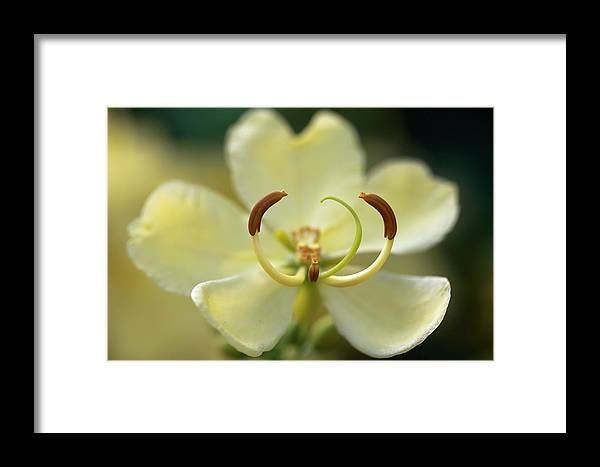 Flowers Framed Print featuring the photograph Stamen Closeup by Mary Haber
