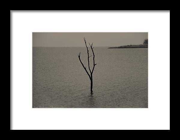 Tree Framed Print featuring the photograph Stand Alone by Kyle Underwood