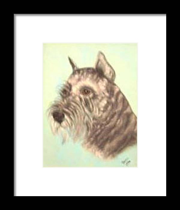 Standard Schnauzer In Show Coat Framed Print featuring the photograph Standard Schnauzer by Pat Mchale