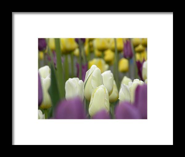 Tulips Framed Print featuring the photograph Standing Alone by Julie Fields