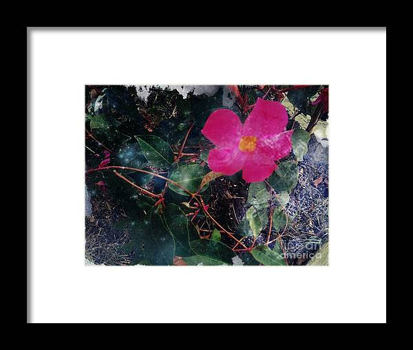 Nature Framed Print featuring the photograph Standing Still by Denisse Del Mar Guevara