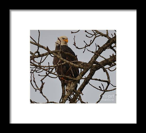 Patzer Framed Print featuring the photograph Stare by Greg Patzer