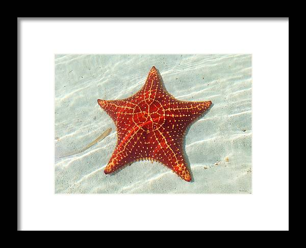 Duane Mccullough Framed Print featuring the photograph Starfish 3 Of Bottom Harbour Sound by Duane McCullough