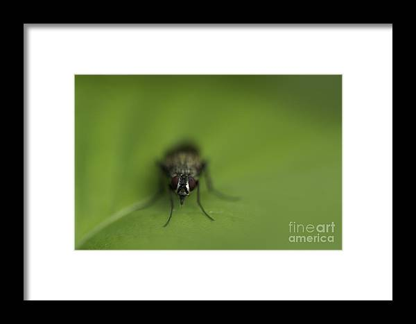 Flies Framed Print featuring the photograph Staring Contest by Tim Kravel