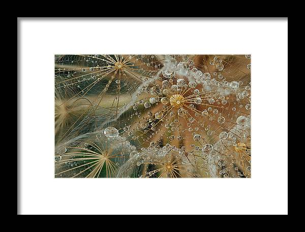 Drops Framed Print featuring the photograph Starless by El Fil?sofo