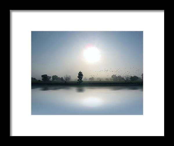 Cedric Hampton Framed Print featuring the photograph Starlings Misty Morning by Cedric Hampton