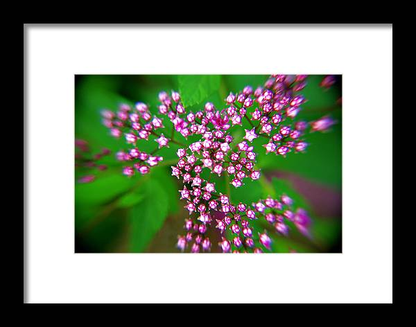 Purple Flowers Framed Print featuring the photograph Stars Aligning by Patricia Trudell