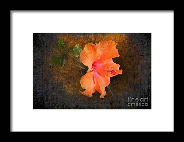 Steel Framed Print featuring the photograph Steely Hibiscus by The Stone Age