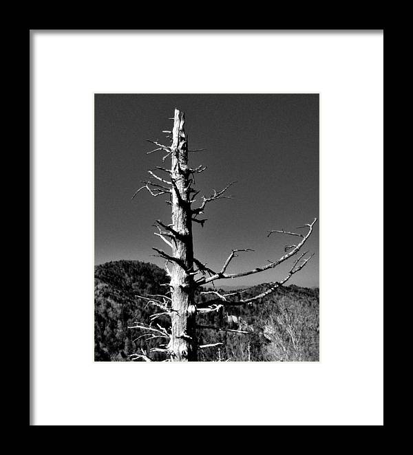 Framed Print featuring the photograph Still Standing by Hominy Valley Photography