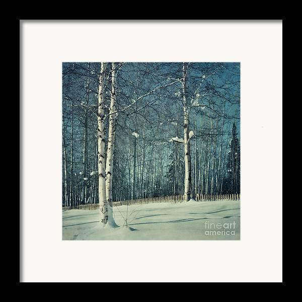 Winter Framed Print featuring the photograph Still Winter by Priska Wettstein