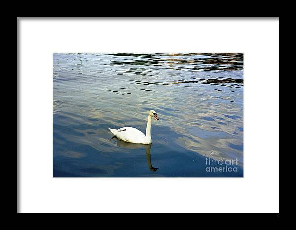 Sweden Framed Print featuring the photograph Stockholm City Harbor Swan by Ted Pollard