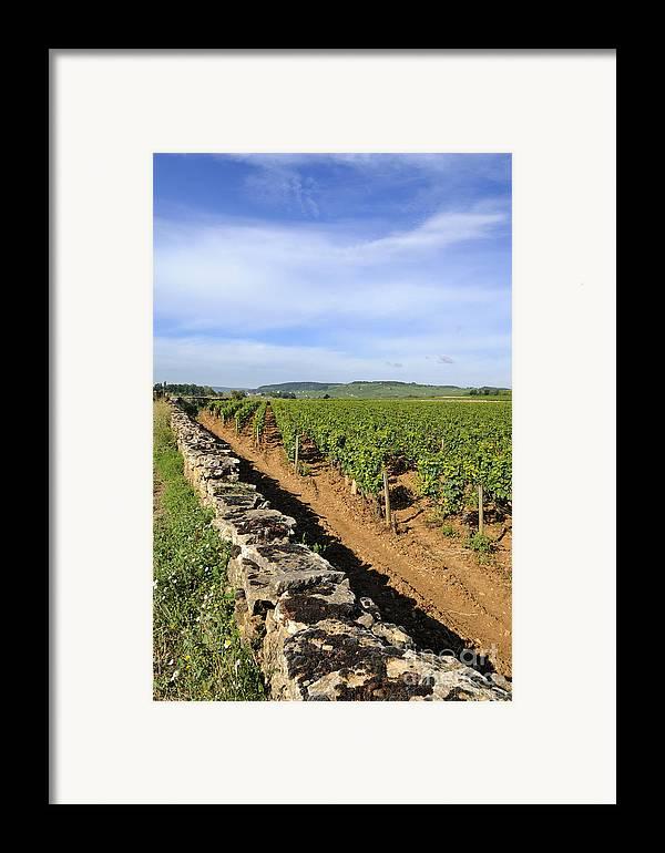 Agricultural  Framed Print featuring the photograph Stone Wall. Vineyard. Cote De Beaune. Burgundy. France. Europe by Bernard Jaubert