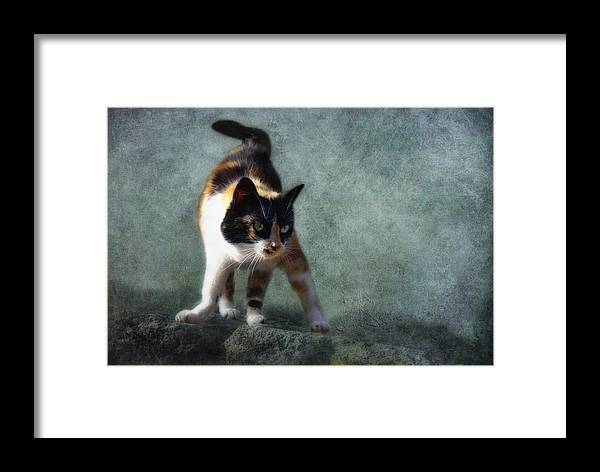 Cat Framed Print featuring the photograph Street Fighter by Claudia Moeckel