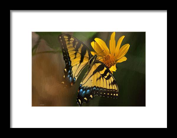 Butterfly Framed Print featuring the photograph Striped Beauty by Dennis Baswell