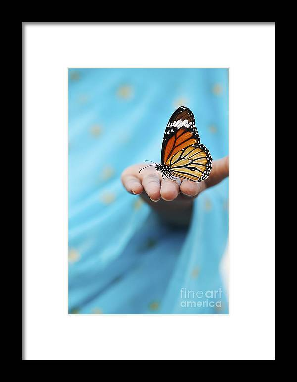 Indian Girl Framed Print featuring the photograph Striped Tiger Butterfly by Tim Gainey