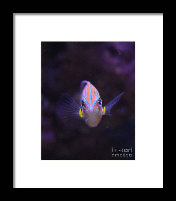 Fish Framed Print featuring the photograph Stripes by Wendy Maka - Alien Garden