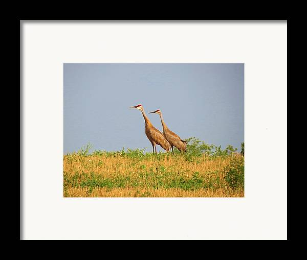 Birds Framed Print featuring the photograph Strolling Sandhills by Feva Fotos