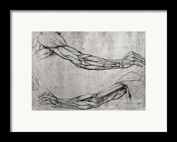 Da Framed Print featuring the drawing Study Of Arms by Leonardo Da Vinci