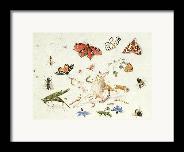 Insect Framed Print featuring the painting Study Of Insects And Flowers by Ferdinand van Kessel